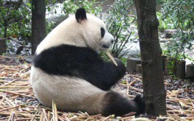 44. Chine : du 13 au 20 septembre 2019 : Chengdu, Leshan, Enshi, Barrage des Trois-Gorges, Zhangjiajie