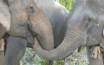 50. Laos : du 28 octobre au 2 novembre 2019 : Pakbeng, Mekong Elephant Park, Luang Prabang, Kuang Si