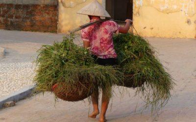 52. Vietnam : du 8 au 12 novembre 2019 : Duong Lam, Tây Phuong, Chùa Thây, Hanoï