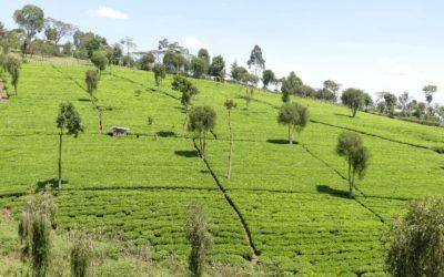 Blog 103 : Kenya : du 10 au 15 mars 2021 : Vallée du Rift, Lac Baringo, Nandi Hills