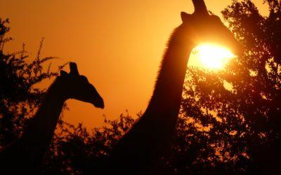 112. Namibie : du 21 au 26 mai 2021 : Hoba, Waterberg, Etosha (1ère partie)