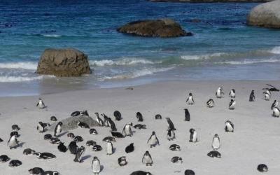 127. Afrique du Sud : du 10 au 16 septembre 2021 : Chapman's Peak drive, Kommetjie, Simon's Town, Cap de Bonne-Espérance, Kalk Bay, Muizenberg
